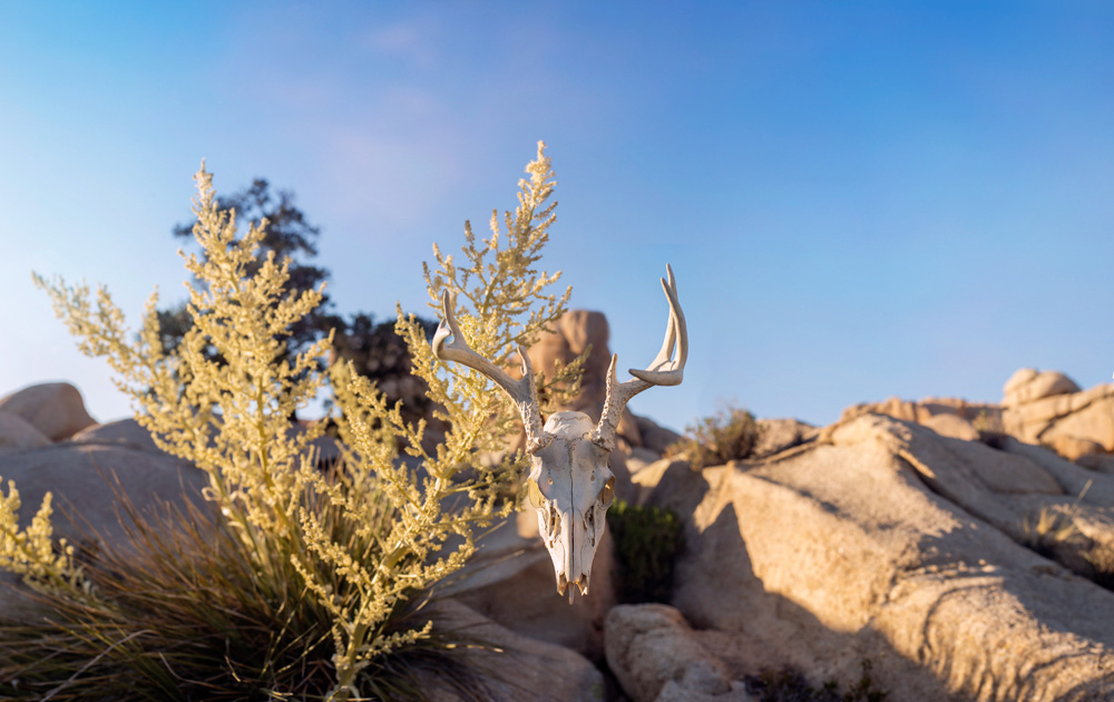 Life and Death in the Desert – JTNP